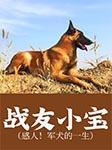 战友小宝(感人!军犬的一生)-漠北狼-何其