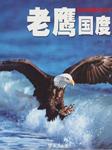 老鹰国度-樊彤-白夜